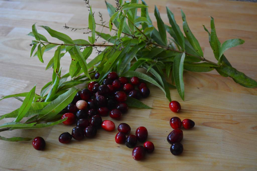 Fresh cranberries and lemon verbena ready for cooking