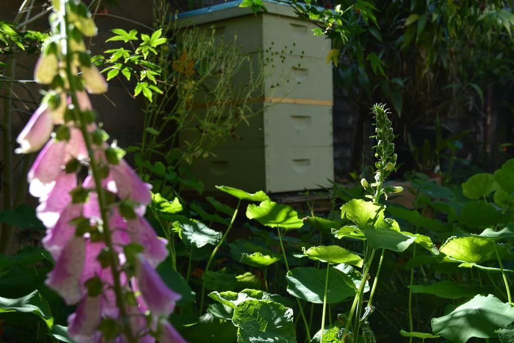 Frances-bee-hive
